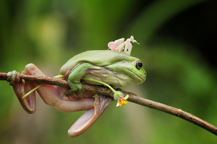 Amphibian Animal Animal Body Part Animal Themes Animal Wildlife Animals In The Wild Branch Close-up Day Focus On Foreground Frog Green Color Lizard Nature No People One Animal Plant Reptile Vertebrate Zoology