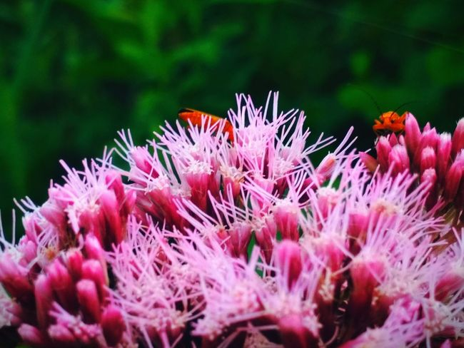 Flower Head UnderSea Flower Springtime Pink Color Underwater Close-up Plant Animal Themes