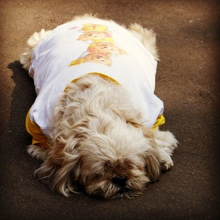 Doggie ^_^