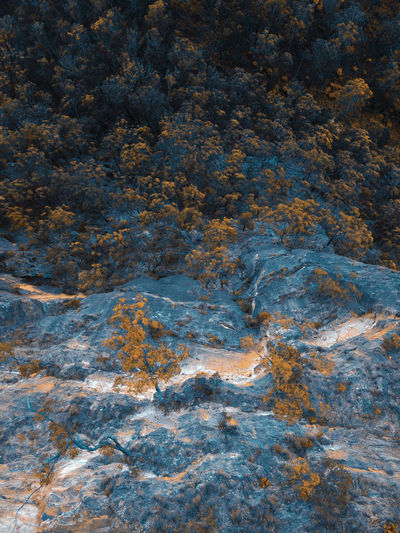 Aerial view of trees in the mountains