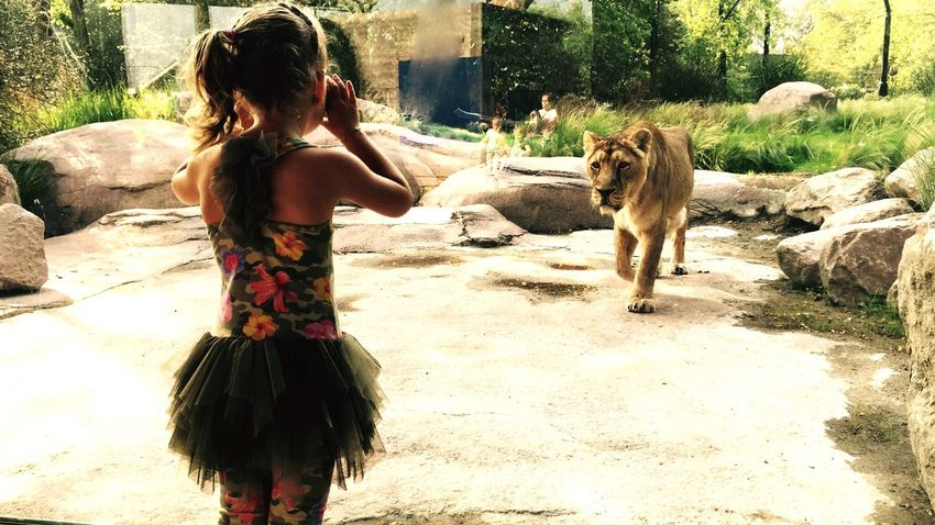 Lion Scary Animals Kingofthejungle Check This Out Girl