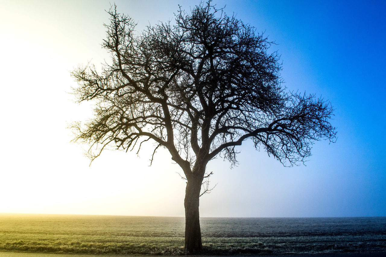 tree, tranquility, tranquil scene, scenics, nature, beauty in nature, lone, clear sky, solitude, landscape, outdoors, sea, horizon over water, branch, bare tree, tree trunk, sky, day, no people