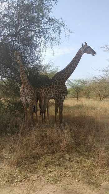 Animal Themes Animals In The Wild Outdoors Nature Bandia Natural Reserve Senegal