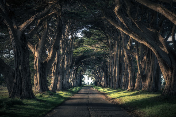 Between Lights and Shadows Colors Grass Nature Road Taking Photos Tranquility Travel Tree Amazing Awesome Beauty In Nature Enjoying Life Landscape Light And Shadow No People Outdoors Scenics Sunset Travel Destinations Tunnel