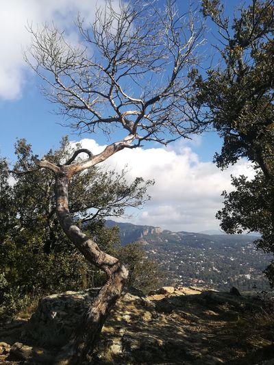 Tree Mountain