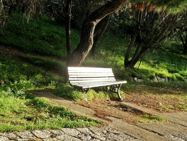 Relaxing Life's Simple Pleasures... Park Bench Nature Grass Trees Shiny Day Shinny Things Sun Reflection Filopapou Mousson Hill Athens Athens, Greece Streetphotography Street Photography