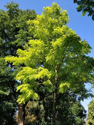 Nature Day Tree Green Color Beauty In Nature Leaf No People Outdoors Plant Growth Taking Photos ❤