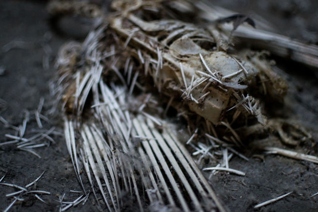 Animal Body Part Animal Themes Attic Bird Bones Carcass Close-up Creepy Dead Death Decay Dusty Fallen Feathers Floorboards Gloomy Grey Kreuzberg Sad Skeleton Terrifying White
