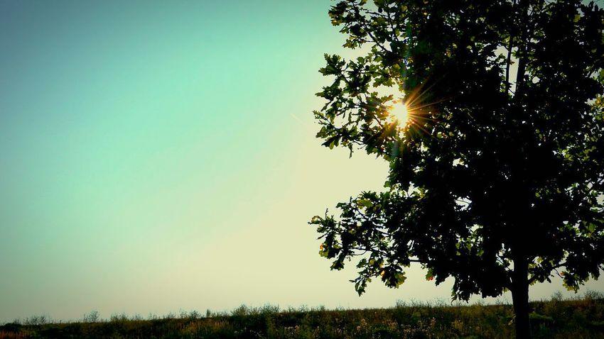 Simplicity Tree Sunlight