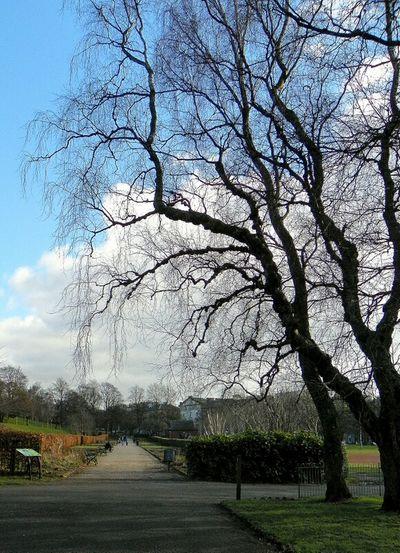 Trees Kelvingrove Park