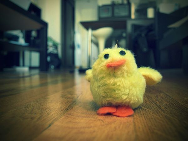 pollo Details Of My Life In My House Chiken Yellow
