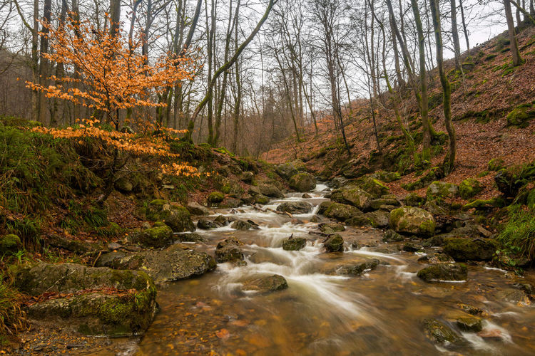Ardennen Ardennes Autumn Autumn colors Belgium Nature Ninglinspo Tree Trees Wildlife & Nature Winter Forest Landscape Leaves_collection Long Exposure Longexposure River Rocks Water Waterfall Waterfalls