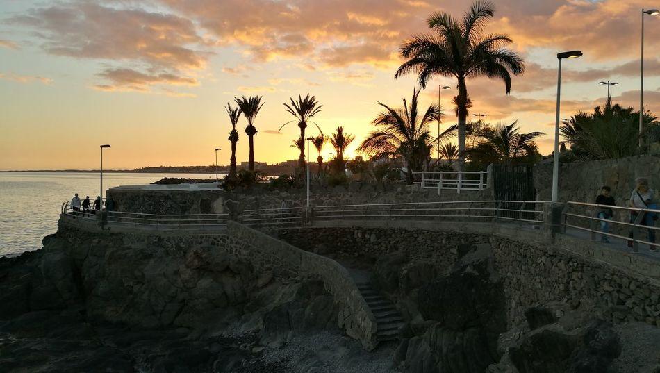 Sunset Palm Tree Horizon Over Water