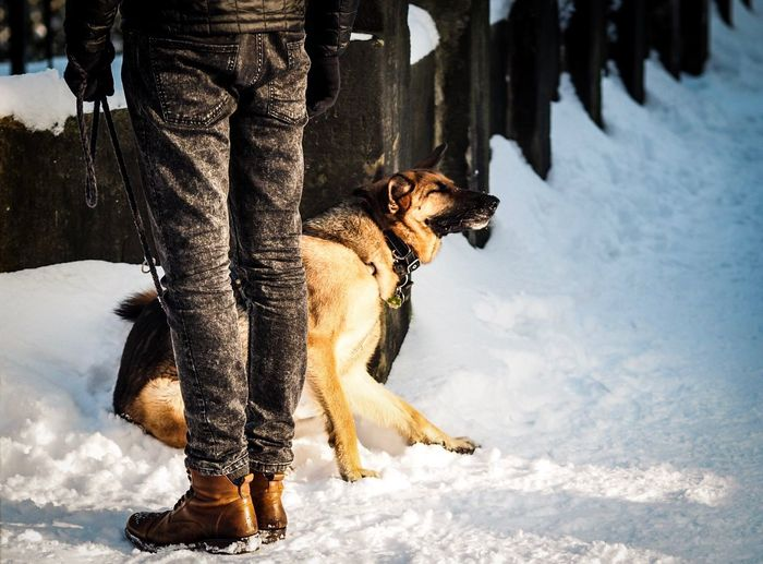 Low section of man with german shepherd on snow covered field