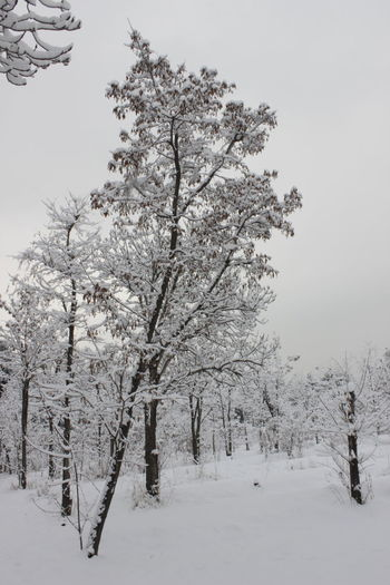 Beauty Beauty In Nature Branch Cold Temperature Day Landscape Nature No People Outdoors Scenics Sky Snow Snowing Tree Winter