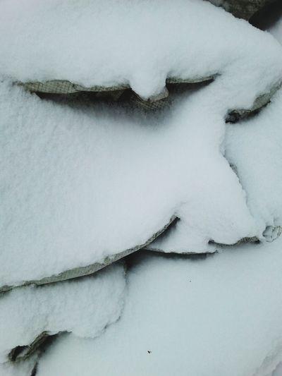 Winter White By CanvasPop PhotoArt By Kitty Fischer