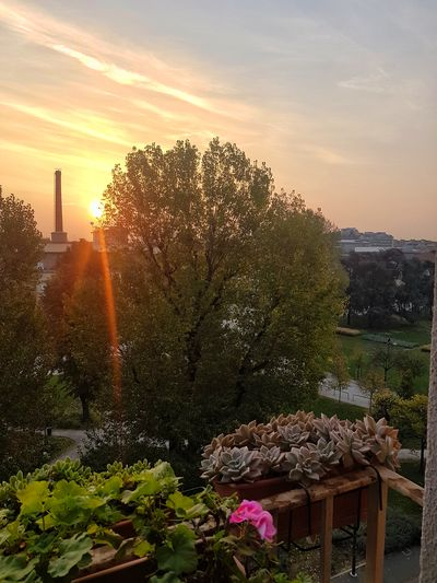 This morning. A warm morning. Just awake Sunrise Nature Sunlight Outdoors Flower Landscape Beauty In Nature Trees Skyandclouds  Getting Creative Getting Inspired Taking Photos Sunrays Relaxing Moments Balcony View From My Point Of View