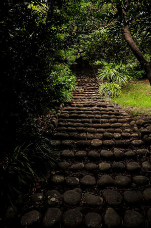 Darkness And Light Dusky Dusky Tree Landscape Lonely Road Stones Tone Steps