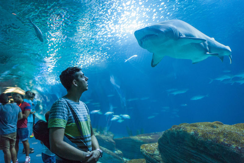 Man at aquarium