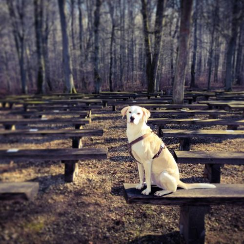 Dog Animal Themes One Animal Pets Domestic Animals No People Outdoors Nature first eyeem photo