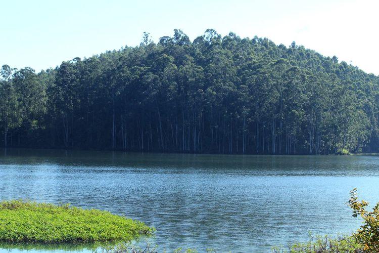Great lake Tree