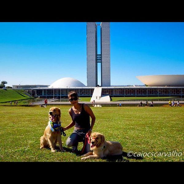 Amores Brasil Brazil Brasília Congressonacional congresso nacional goldenretriever love amor insta_dog dog bluesky ceu photo picstitch picoftheday photooftheday cool amazing tbt instagood nice like fun
