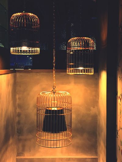 Cage Bird Cage Trapped Somewhere In Time