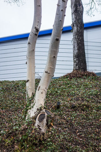 Blue Line Building Exterior Built Structure Calm Close-up Composition Day Fench Growth Nature No People Outdoors Overgrown Plant Simple Sky Tree Tree