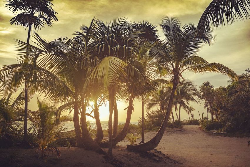 Mexican paradise Caribbean Ocean Landscape Waterscape Stockphoto Photography Print Mexico Nature Palm Tree Sunrise Tones Colours Colors EyeEm Selects Tree Silhouette Sky Tropical Tree Tropical Climate Palm Leaf