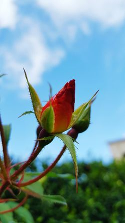 Flower Close-up Growth Bud Focus On Foreground Freshness Fragility Plant Nature Beauty In Nature Selective Focus Sepal Springtime Flower Head New Life Day Single Flower Outdoors Petal No People