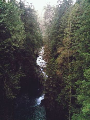 Waterfall Beautiful Forest Trees Nature Follow Me I'll Follow Back Followme The Great Outdoors - 2016 EyeEm Awards EyeEmNewHere Perspectives On Nature Perspectives On Nature