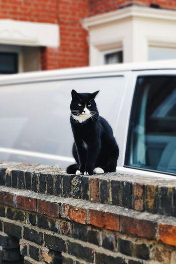 Portrait of black cat sitting on retaining wall