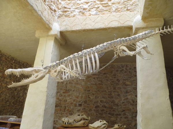 Reptilia Crocodilepark Jaw; Wild Animal Wildlife And Nature