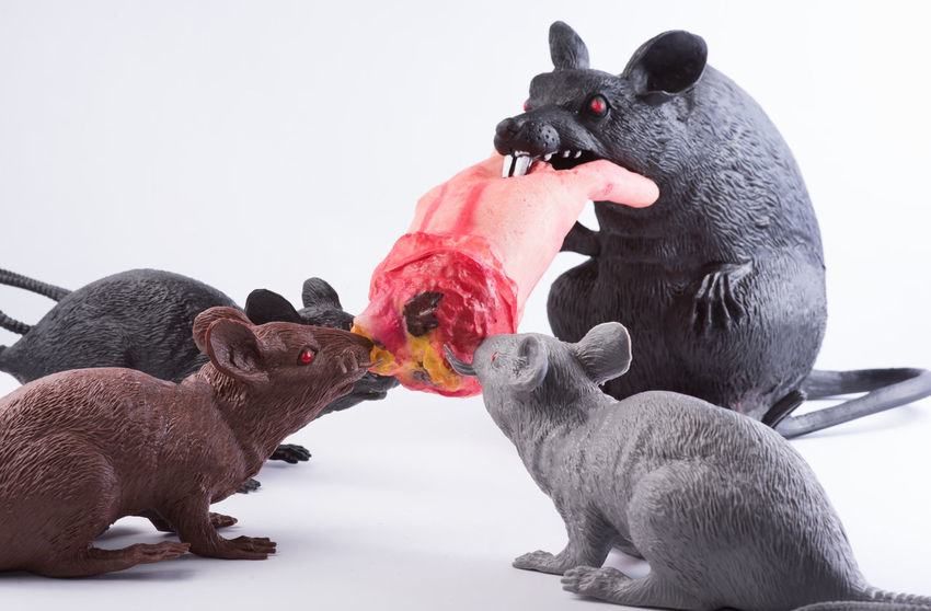 Eating Halloween Plastic Bag Animal Themes Backgrounds Bird Blood Border Candy Corn Close-up Day Domestic Animals Hand Mammal Nature No People Outdoors Plastic Rats Rubber Scene Season  Studio Shot Togetherness White