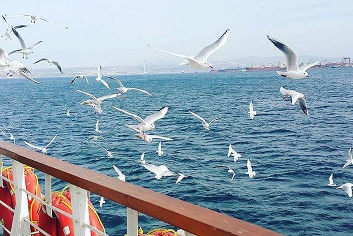 Deniz Marmara Bursa Istanbul Istanbulyolu Sea Marmarasea Peace Water Uçmak Ozgurluktur Yalova Gebze Martı Instagood Instalike Pastırmayazı Instaturkey Hayatguzel Instaistanbul Istanbull Istanbulvapur Vapur