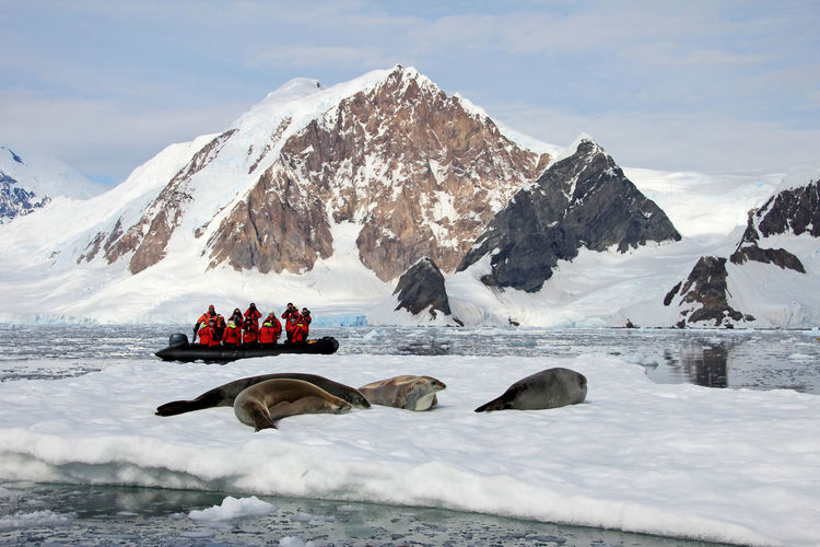 Inflatable boat full of tourists, watching for whales and seals, Antarctic Peninsula, Antarctica Antarctica Antarctic Boat Inflatable  Inflatable Boat Watching Cold Ice Iceberg Ocean South Pole Water Snow Blue Landscape Ship Whale Crabeater Seal Crabeater Seal Wildlife Leopard Seal Animal Mammal
