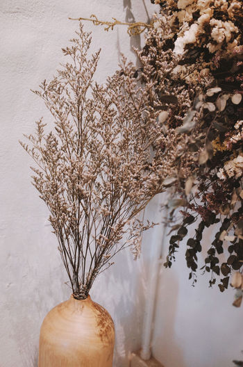 Plant Tree Nature No People Close-up Indoors  Beauty In Nature Freshness Still Life Flowering Plant Food Flower Vase Food And Drink Growth Branch Day Decoration Fragility