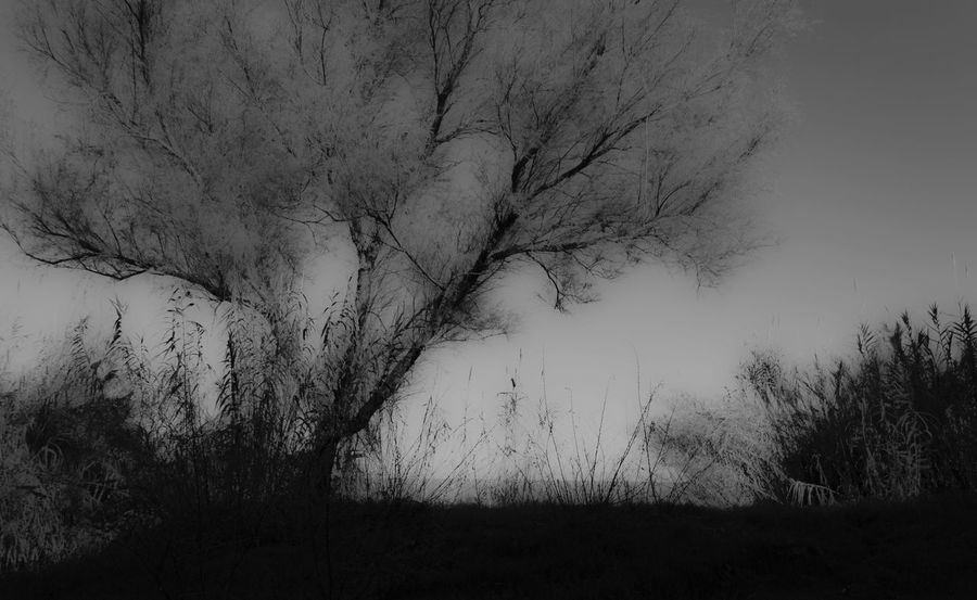 December Sea Dark Landscape Blackandwhite No Detail Under Exposure Nature Tree Backgrounds Beauty In Nature