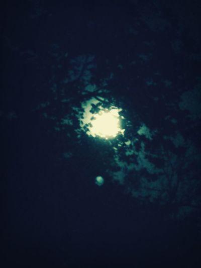 Moon shines crazy bright through the tree. Summer Nights