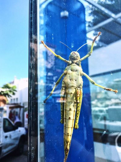 Grasshopper Window Glass Clear Green Insect Blue Nature Close-up Outdoors No People Beauty In Nature