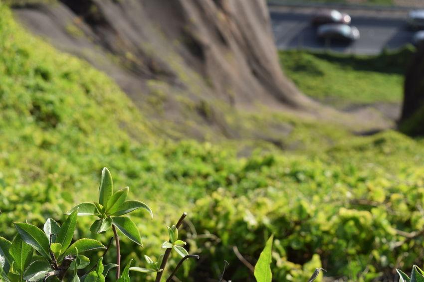 Botany Day Flower Head Focus On Foreground Fragility Freshness Grassy Growth Plant