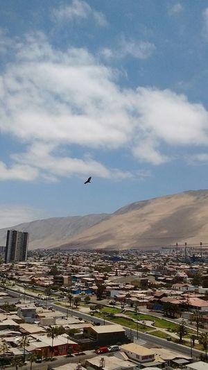 City Cityscape desert Iquique Chile  Landscape urban