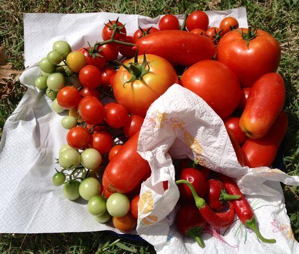 Taking Photos Vegetables & Fruits Red CiociariaEye