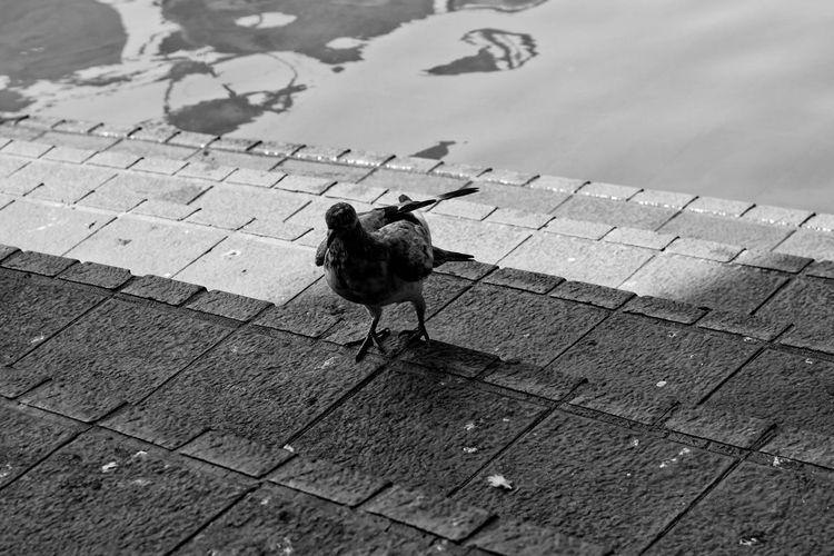 High angle view of bird on footpath