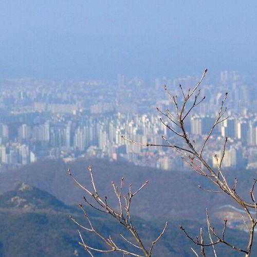 . 서울의 봄 Spring of Seoul Korea Seoul_korea Fujifilm S5pro landscape tree branch viewpoint instagood instamood picoftheday mountain 관악산 연주암 정상위에서_후들후들_덜덜덜