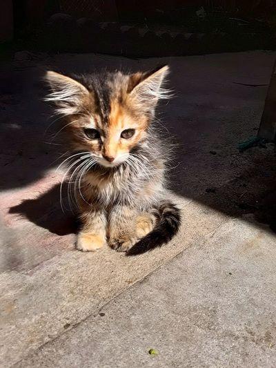 kitt in My Best