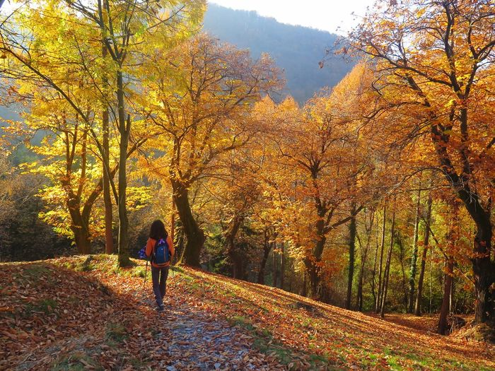 Autumn Leaf Forest Tree Beauty In Nature Rear View Scenics Outdoors Walking Tranquility One Person Nature Leaves Wood Wooden Woods Hiking Hikingadventures Into The Woods Into The Wild Colors Orange Red Yellow Trees Be. Ready.
