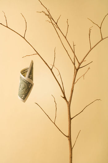 Conceptual image of a dry money tree with only one bill left Broke Currency Economics Finances Losing Bare Tree Branch Conceptual Crisis Debt Deflation Depreciation Devalue  Devalued Currency Dollar Dollar Crisis Downturn Dry Money No People One Dollar  Poverty