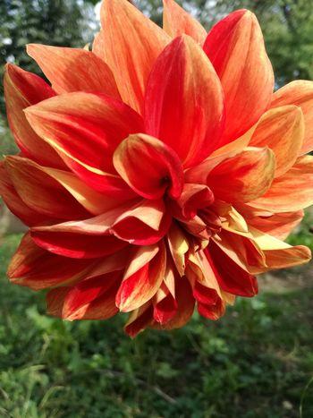 Flower Single Flower Plant Red Vibrant Color