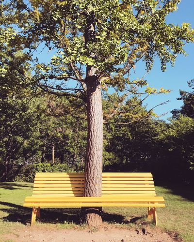 Open Edit Yellow Bench Tree Getting Creative Nature Funny Showcase July The Magic Mission TakeoverContrast Modernism Invading Nature Adapted To The City Paint The Town Yellow